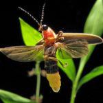 insectos del amazonas