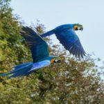 aves del amazonas