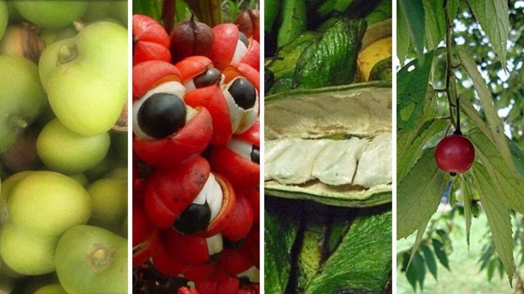 productos de la amazonia