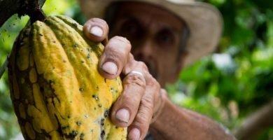 hombre agarrando cacao
