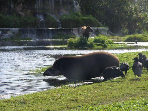 habitat del tapir