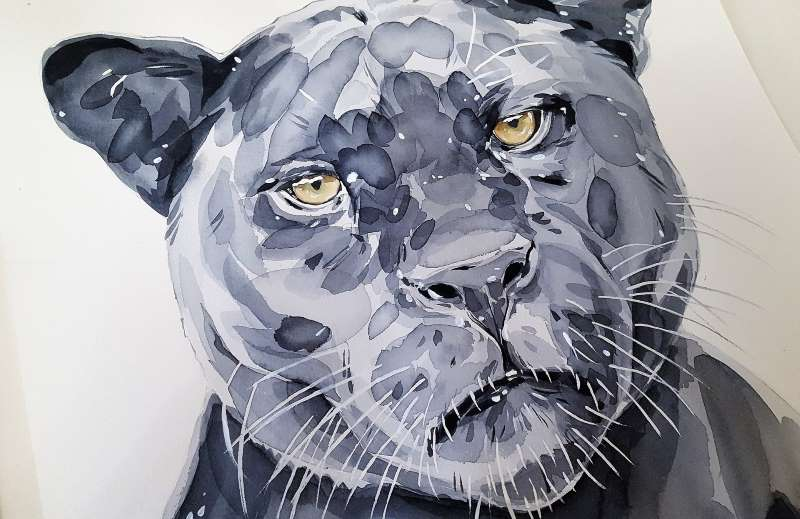 dibujo de jaguar negro