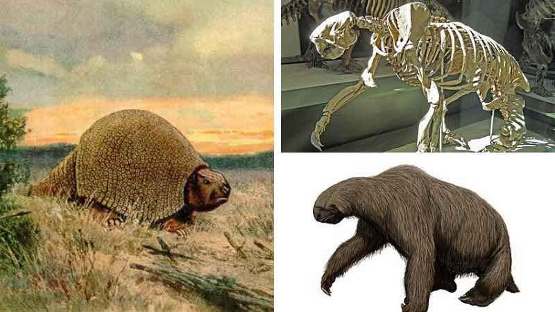 Animales de la Era Cenozoica en el Amazonas