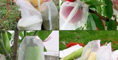 bolsas para proteger la pitaya