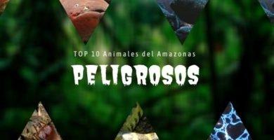 animales del Amazonas Peligrosos