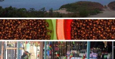 Gatsronomía Amazónica de Venezuela