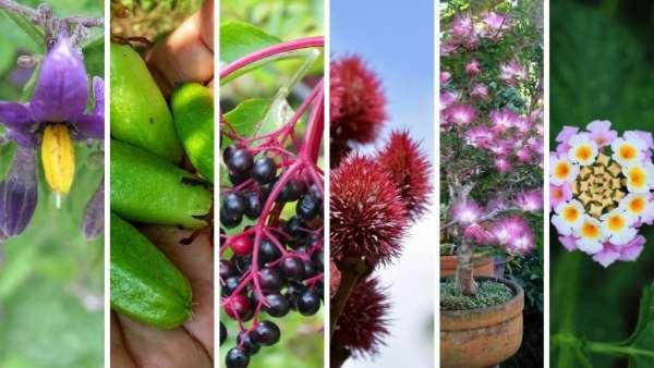plantas-medicinales del amazonas