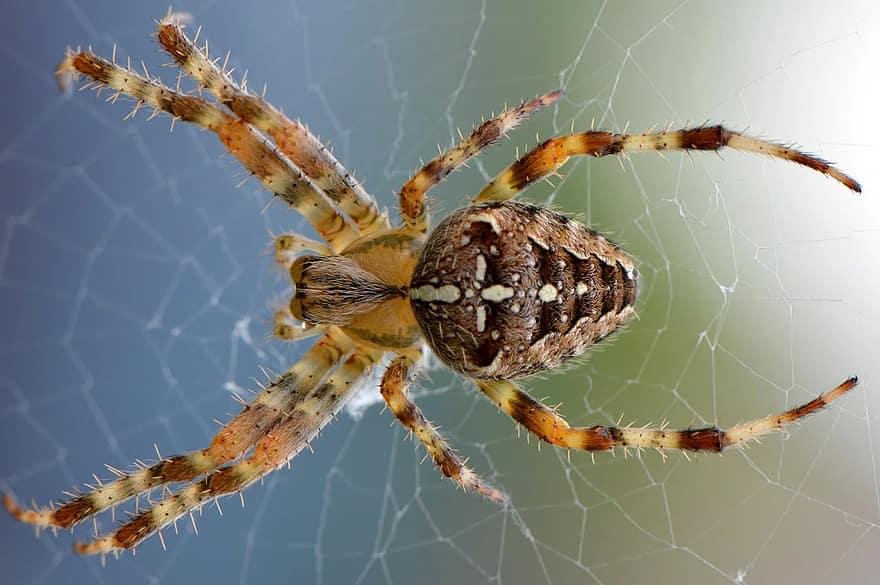 Araña prepara su presa
