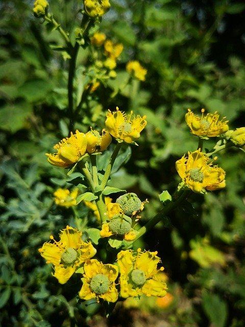 RUDA : plantas maestras del amazonas