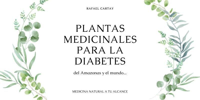 plantas medicinales para la diabetes (2)
