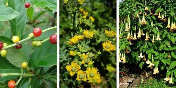 portada plantas maestras del amazonas LOW
