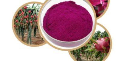 100% Natural Pitaya en polvo