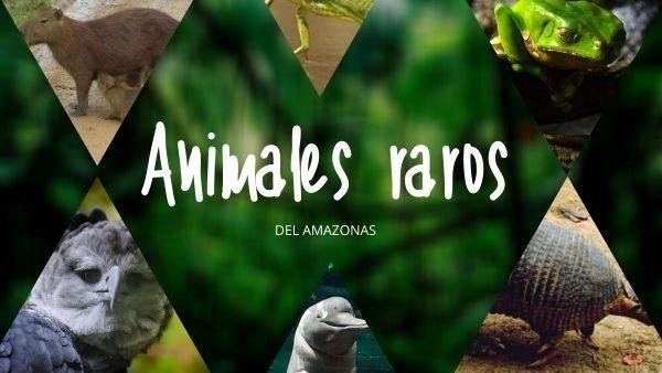 animales raros del amazonas