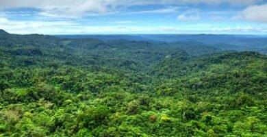 selva amazónica en puyo ecuador