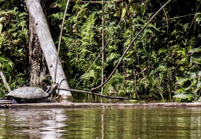 7Parque-Nacional-Natural-Cahuinari