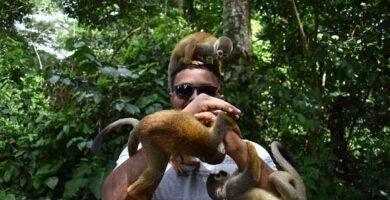 mono ardilla en la isla de los micos