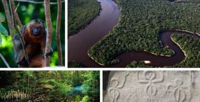 Parque Nacional de Jaú