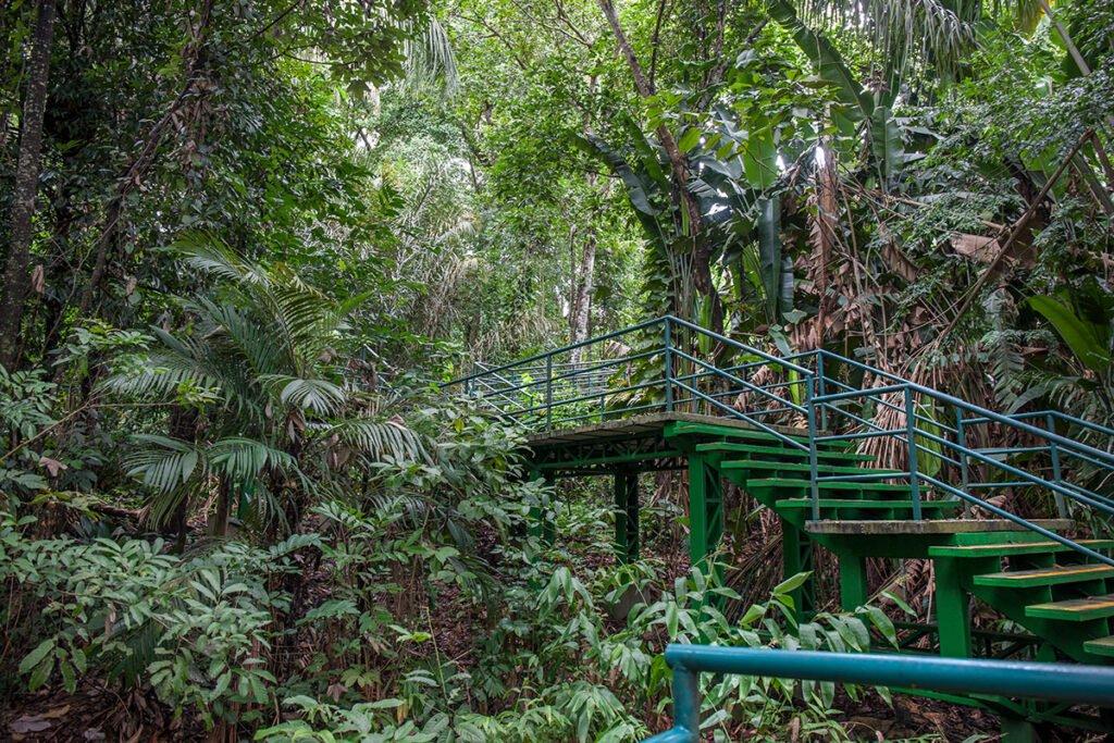 SEndero Bosque de la Ciencia