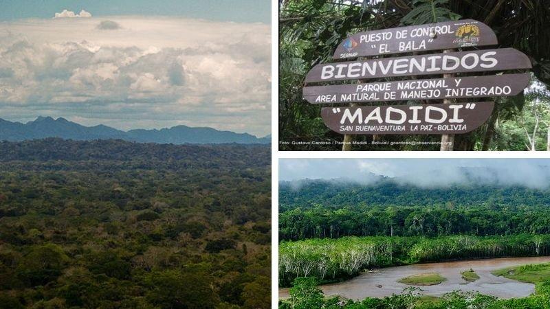 Area Natural de Manejo Integrado MADIDI