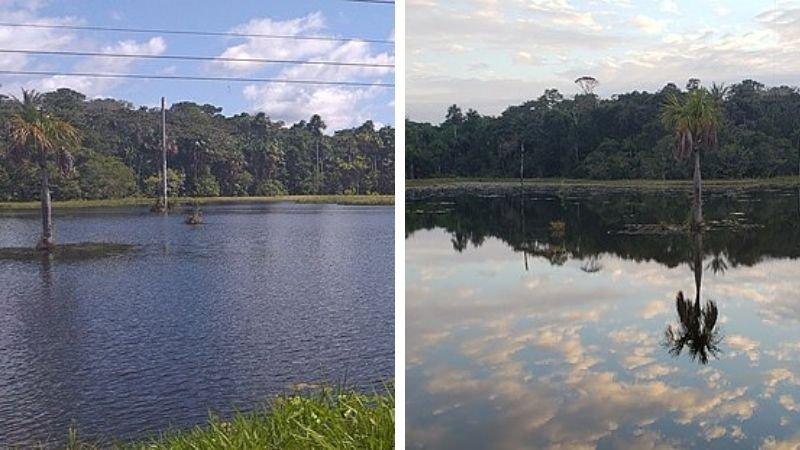 Reserva de Vida Silvestre Amazónica Manuripi
