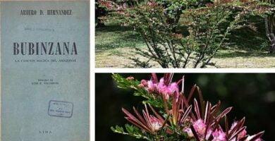 bobinsana o bubinzana portada articulo del amazonas