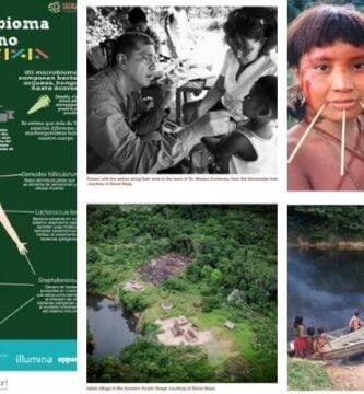 microbiota indígena