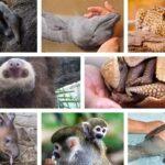bebés de animales del amazonas portada
